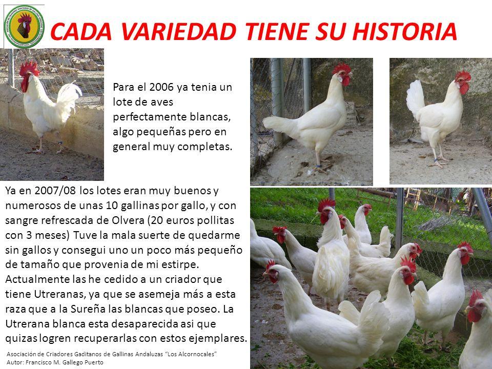 CADA VARIEDAD TIENE SU HISTORIA Para el 2006 ya tenia un lote de aves perfectamente blancas, algo pequeñas pero en general muy completas. Ya en 2007/0