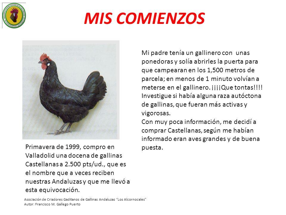 LAS PRIMERAS ANDALUZAS Ese mismo verano, logre cambiar las Castellanas por un gallo Andaluz y 5 gallinas de la variedad ceniza.