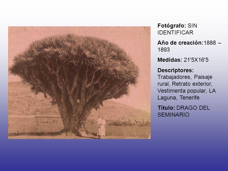 Fotógrafo: SIN IDENTIFICAR Año de creación:1888 – 1893 Medidas: 21 5X16 5 Descriptores: Trabajadores, Paisaje rural, Retrato exterior, Vestimenta popular, LA Laguna, Tenerife Título: DRAGO DEL SEMINARIO