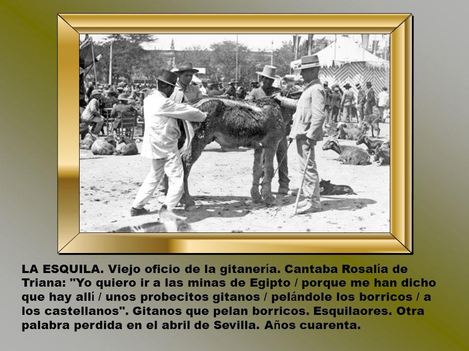 CABALLOS SIN PASEO. La explanada del Prado, extrarradio de una Sevilla con epicentro en el alminar, era una turbamulta de caballos en los a ñ os trein