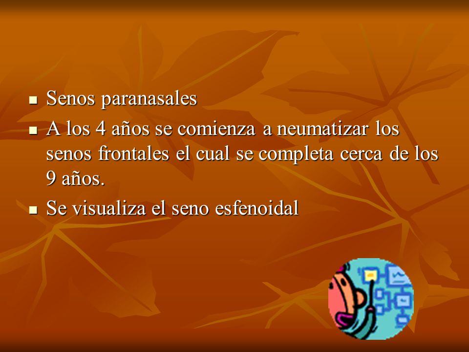 Senos paranasales Senos paranasales A los 4 años se comienza a neumatizar los senos frontales el cual se completa cerca de los 9 años.