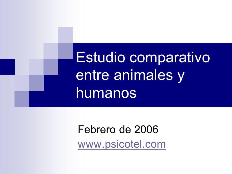 Estudio comparativo entre animales y humanos Febrero de 2006 www.psicotel.com