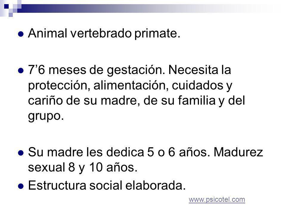 Animal vertebrado primate. 76 meses de gestación.