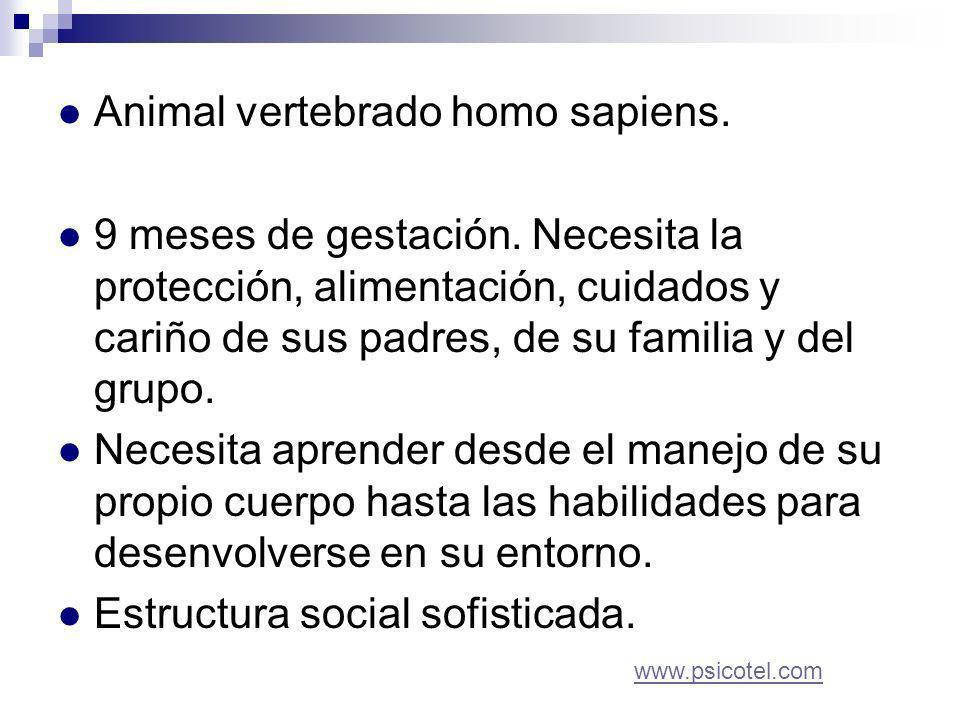 Animal vertebrado homo sapiens. 9 meses de gestación.