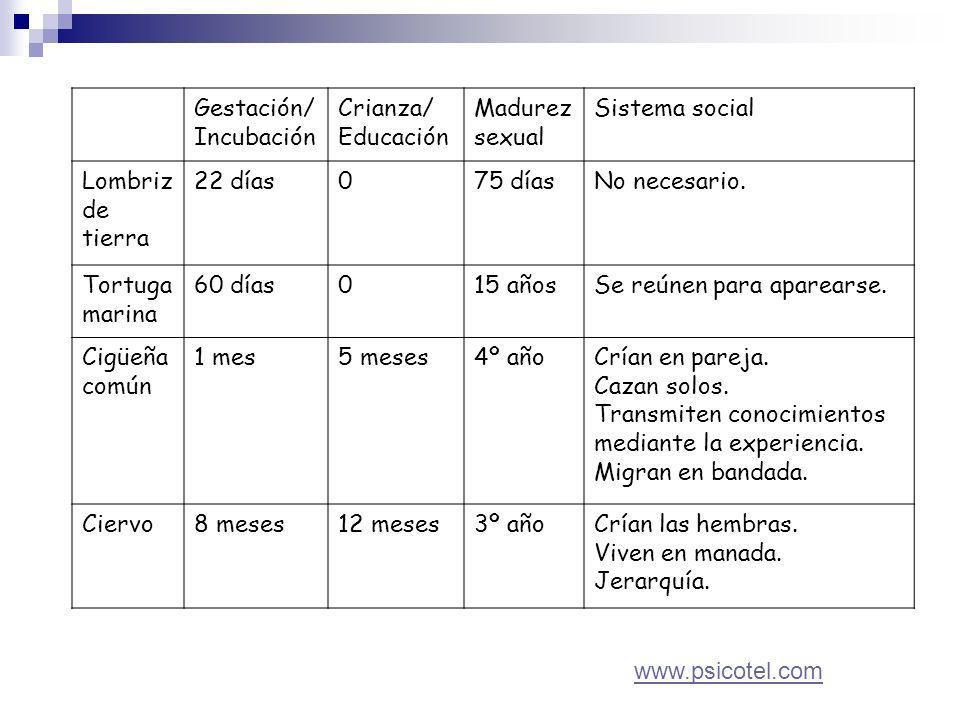 Gestación/ Incubación Crianza/ Educación Madurez sexual Sistema social Lombriz de tierra 22 días075 díasNo necesario.