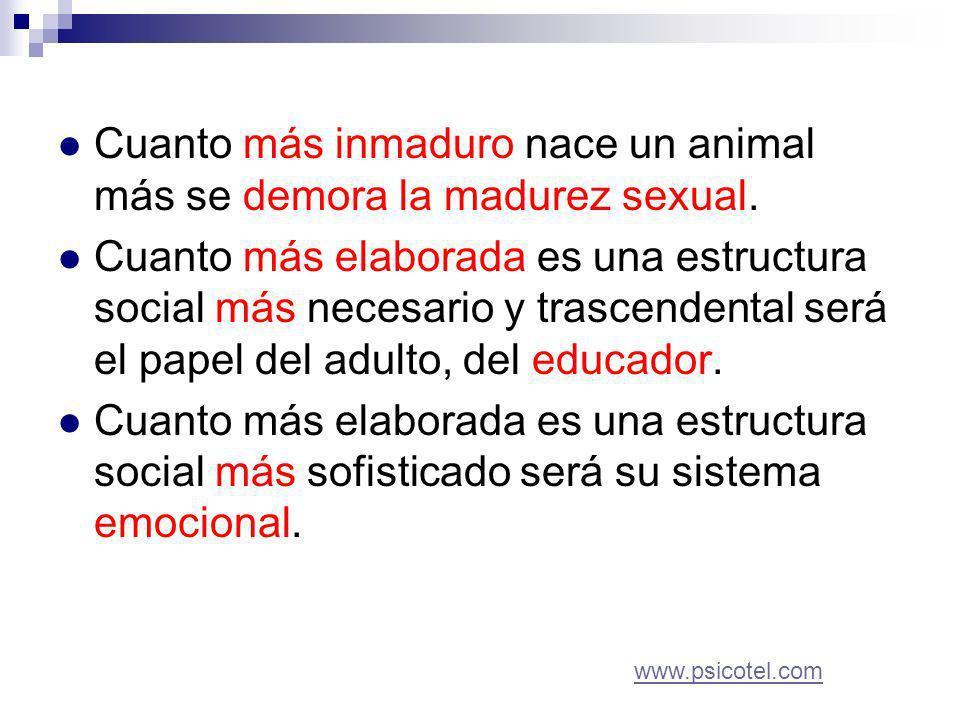 Cuanto más inmaduro nace un animal más se demora la madurez sexual.