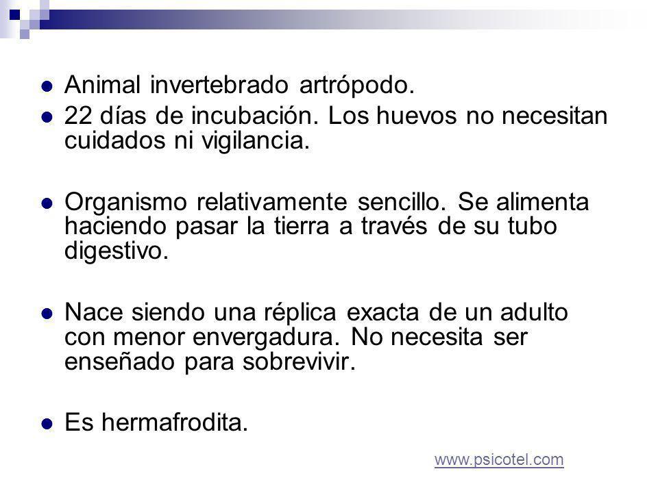 Animal invertebrado artrópodo. 22 días de incubación.