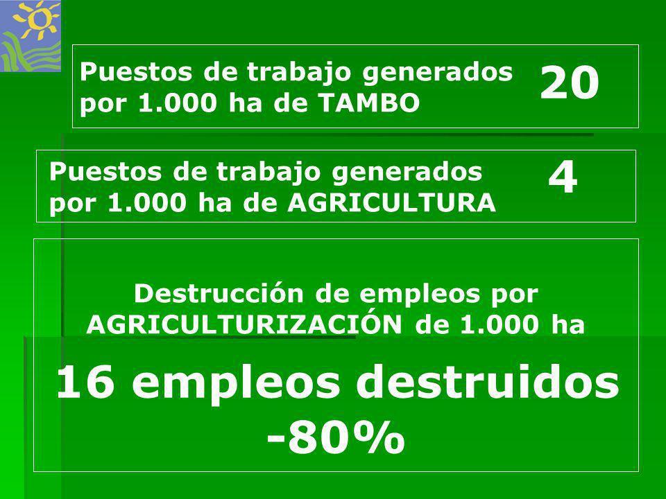 16 empleos destruidos -80% Destrucción de empleos por AGRICULTURIZACIÓN de 1.000 ha Puestos de trabajo generados por 1.000 ha de TAMBO 20 Puestos de t