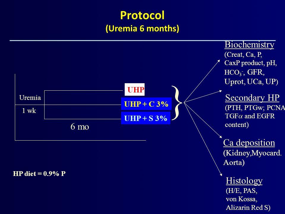 UHP UHP + C 3% UHP + S 3% Uremia 1 wk 6 mo HP diet = 0.9% P } Biochemistry (Creat, Ca, P, CaxP product, pH, HCO 3 -, GFR, Uprot, UCa, UP ) Ca depositi