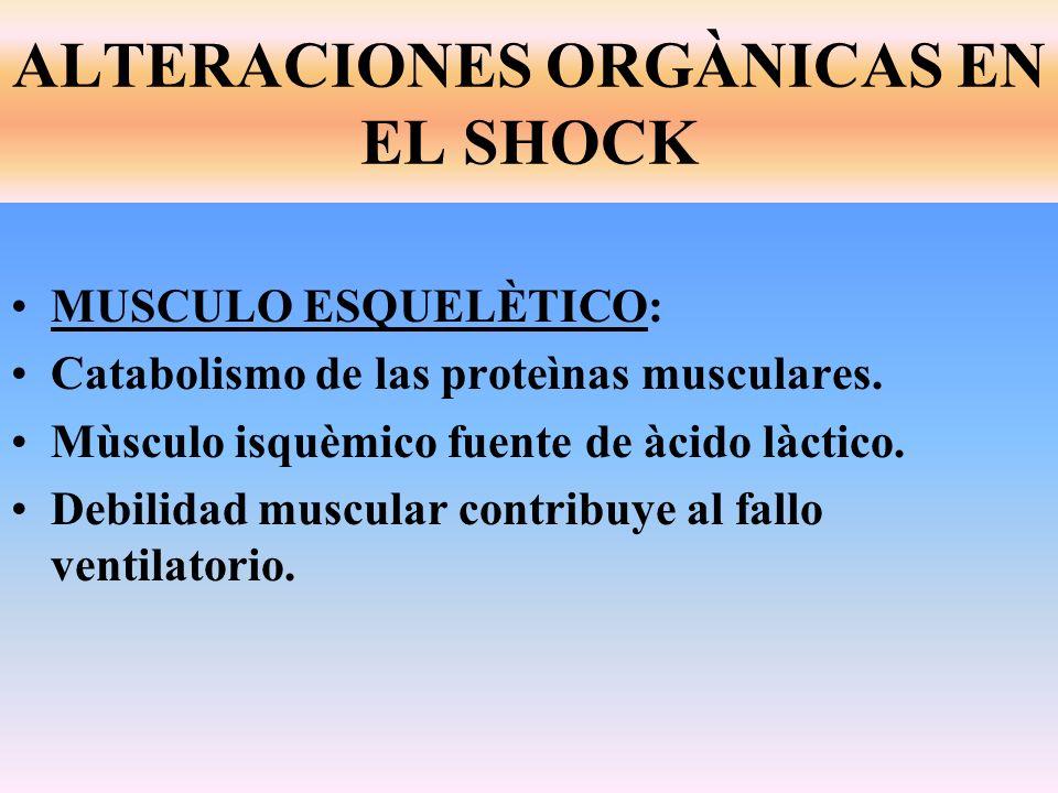 MUSCULO ESQUELÈTICO: Catabolismo de las proteìnas musculares. Mùsculo isquèmico fuente de àcido làctico. Debilidad muscular contribuye al fallo ventil