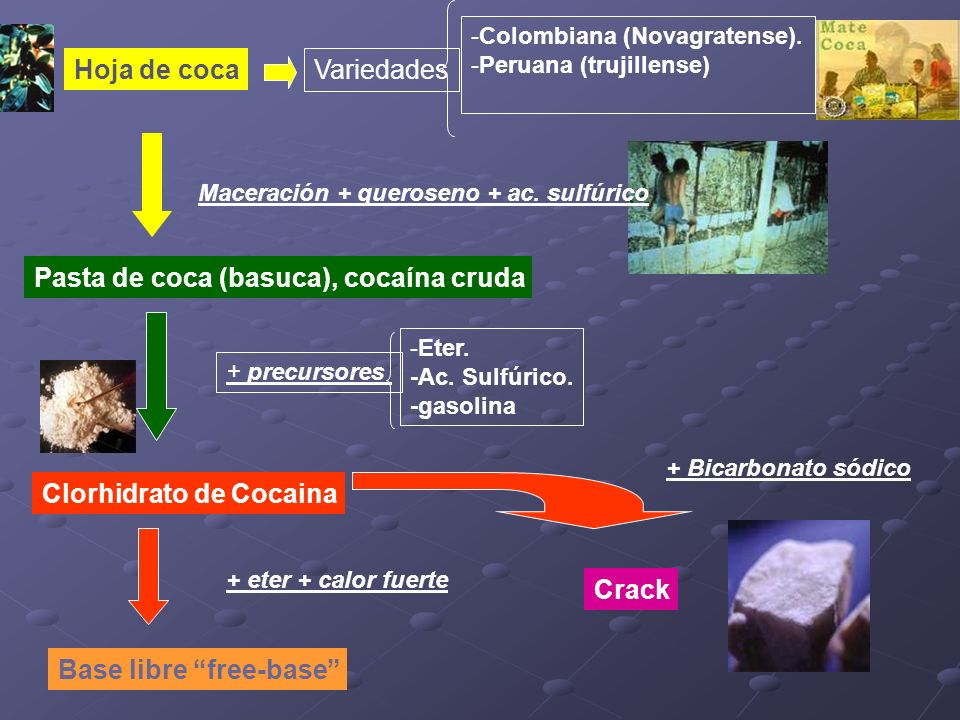 Variedades -Colombiana (Novagratense). -Peruana (trujillense) + precursores -Eter. -Ac. Sulfúrico. -gasolina Clorhidrato de Cocaina Base libre free-ba