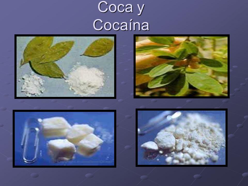 Coca y Cocaína