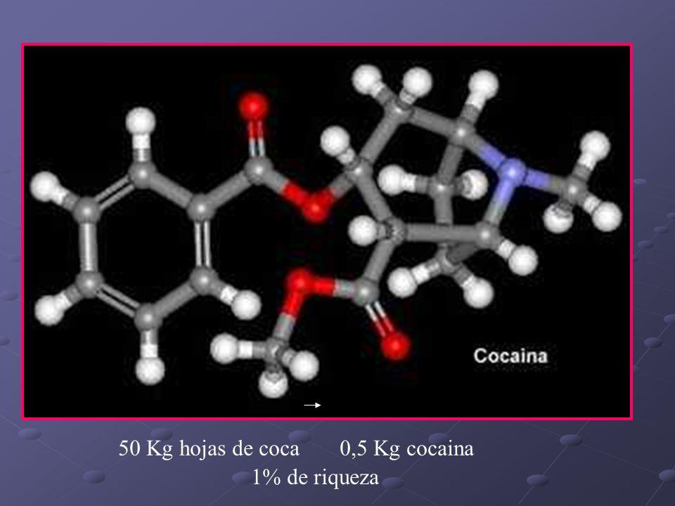 50 Kg hojas de coca 0,5 Kg cocaina 1% de riqueza