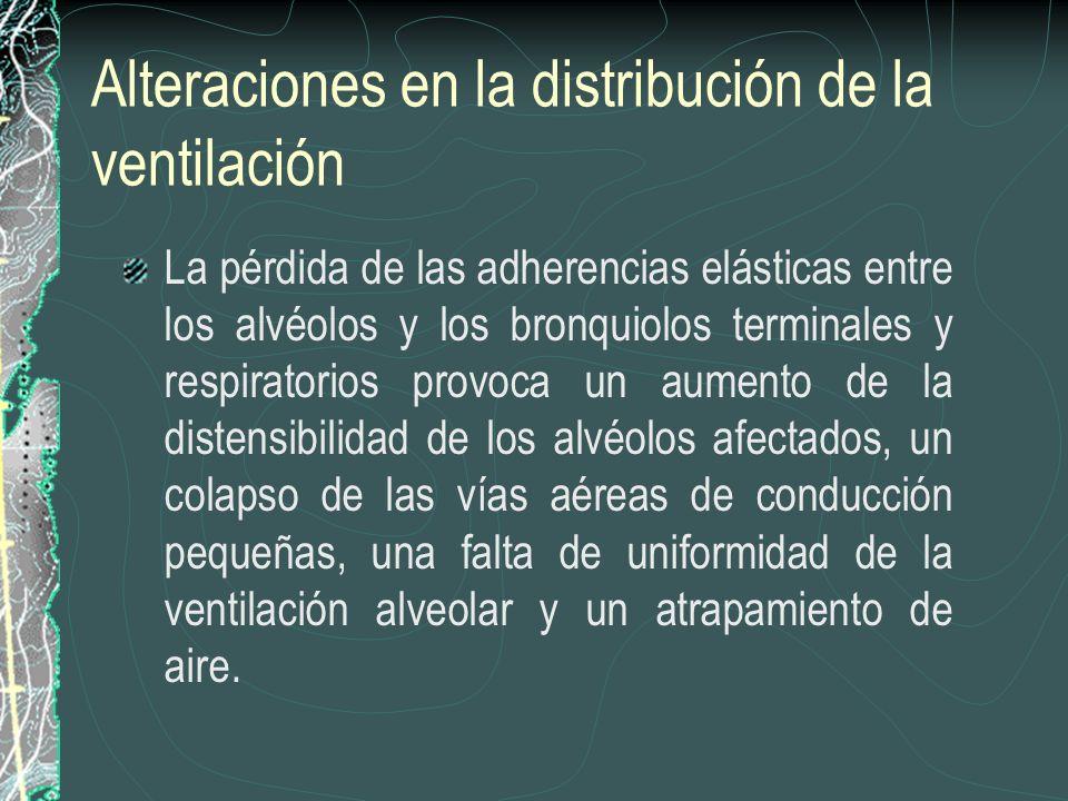 Alteraciones en la distribución de la ventilación La pérdida de las adherencias elásticas entre los alvéolos y los bronquiolos terminales y respirator