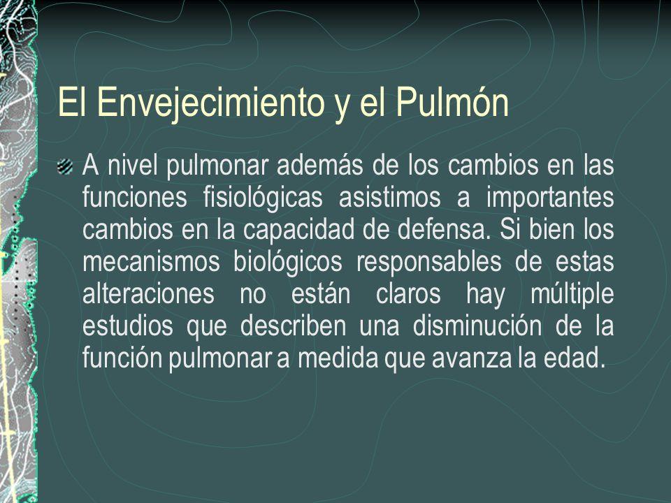 El Envejecimiento y el Pulmón A nivel pulmonar además de los cambios en las funciones fisiológicas asistimos a importantes cambios en la capacidad de