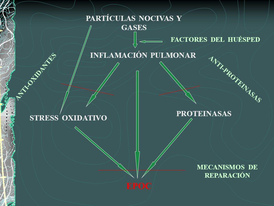 PARTÍCULAS NOCIVAS Y GASES INFLAMACIÓN PULMONAR FACTORES DEL HUÉSPED STRESS OXIDATIVO PROTEINASAS ANTI-PROTEINASAS ANTI-OXIDANTES EPOC MECANISMOS DE R