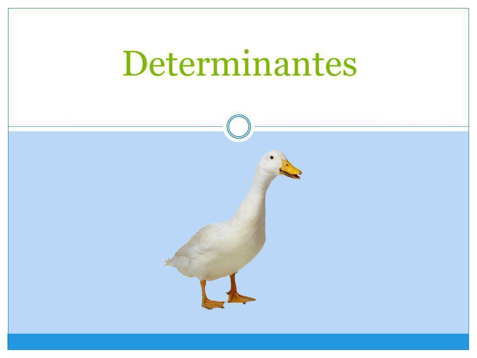 Los Determinantes Los determinantes son palabras que acompañan al nombre.