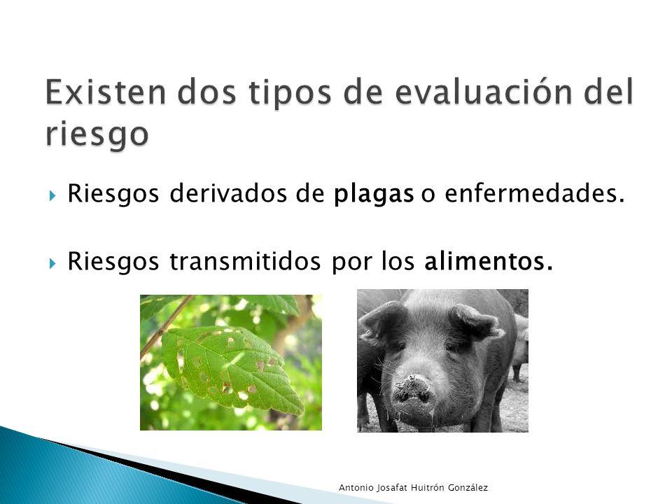 Riesgos derivados de plagas o enfermedades. Riesgos transmitidos por los alimentos. Antonio Josafat Huitrón González