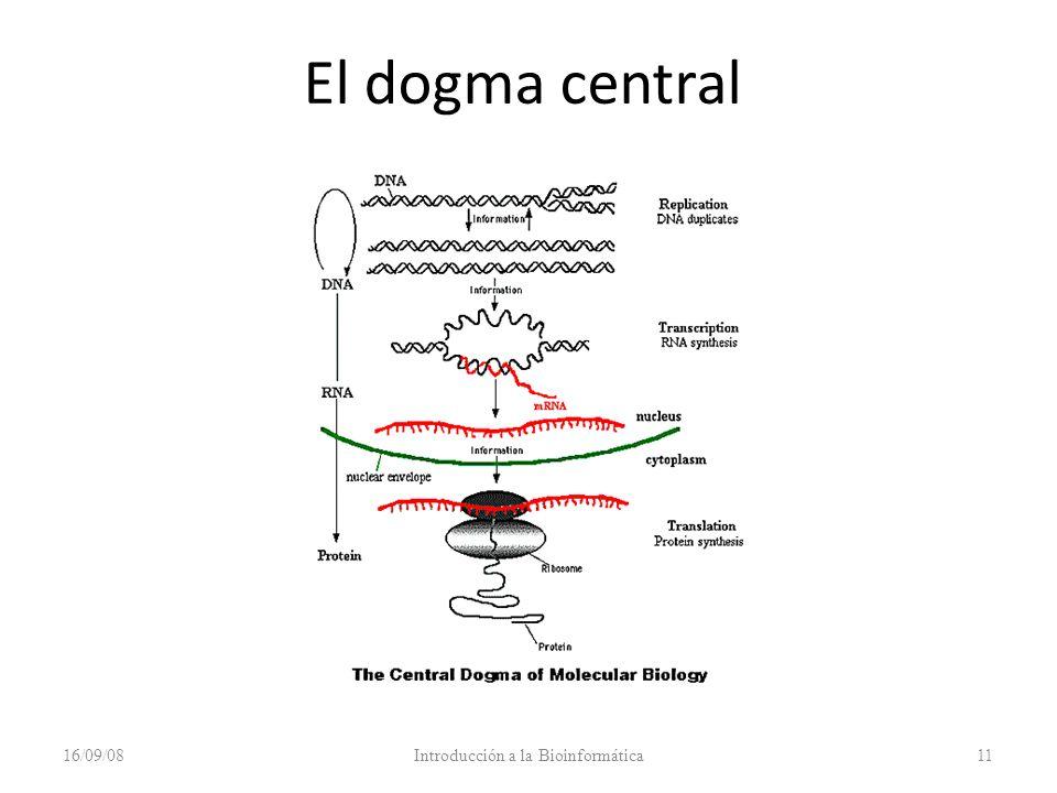 16/09/08Introducción a la Bioinformática11 El dogma central