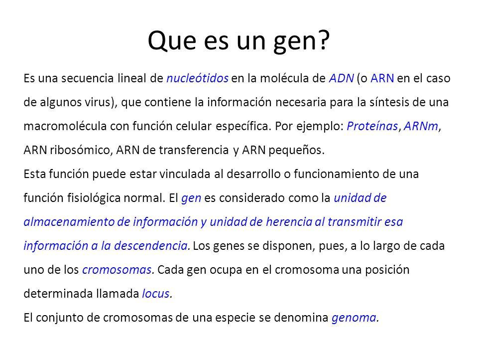 Que es un gen? Es una secuencia lineal de nucleótidos en la molécula de ADN (o ARN en el caso de algunos virus), que contiene la información necesaria