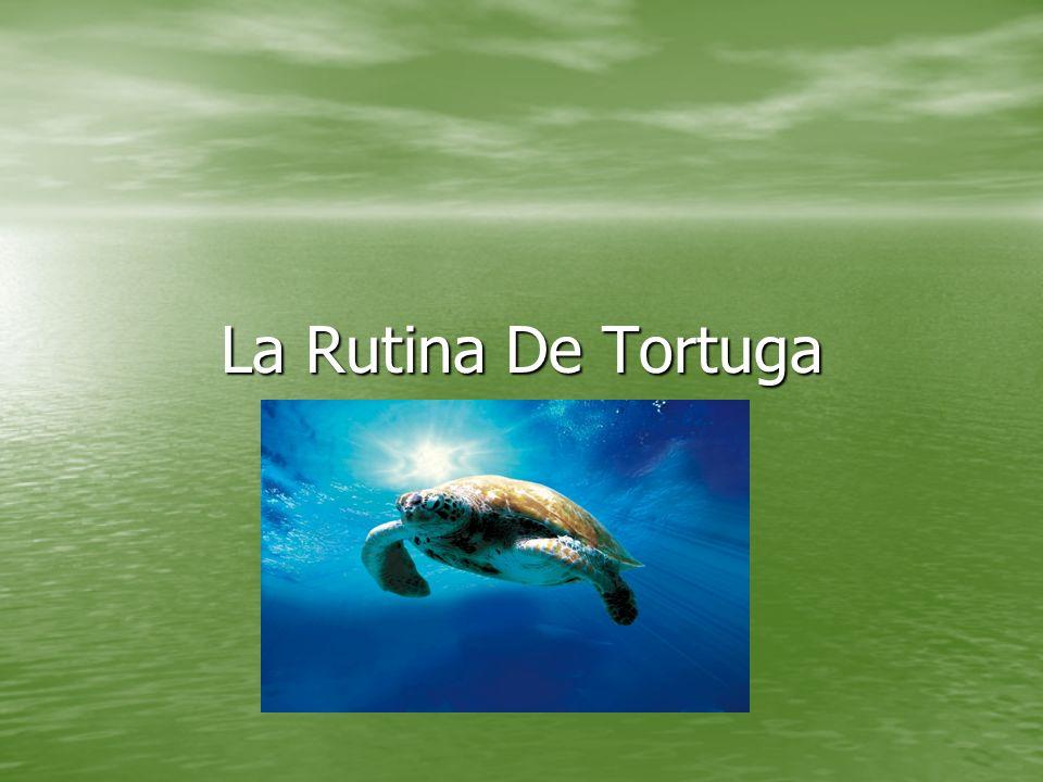 La mañana de tortuga En la mañana, la tortuga se desparte muy tarde.