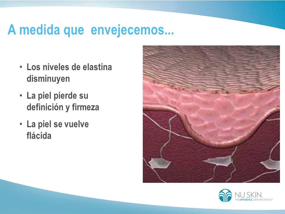 Fibras de elastina Las fibras de elastina le otorgan a la piel joven la calidad de firmeza para volver a su lugar