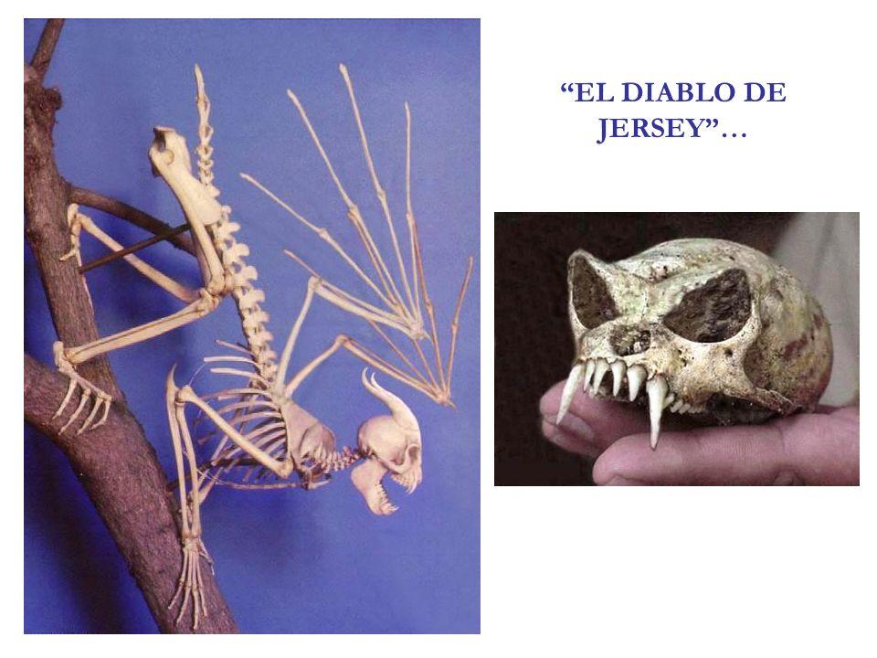 EL DIABLO DE JERSEY…