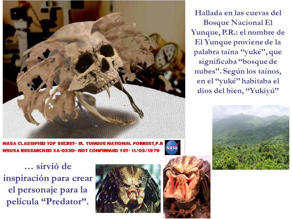 … sirvió de inspiración para crear el personaje para la película Predator. Hallada en las cuevas del Bosque Nacional El Yunque, P.R.: el nombre de El