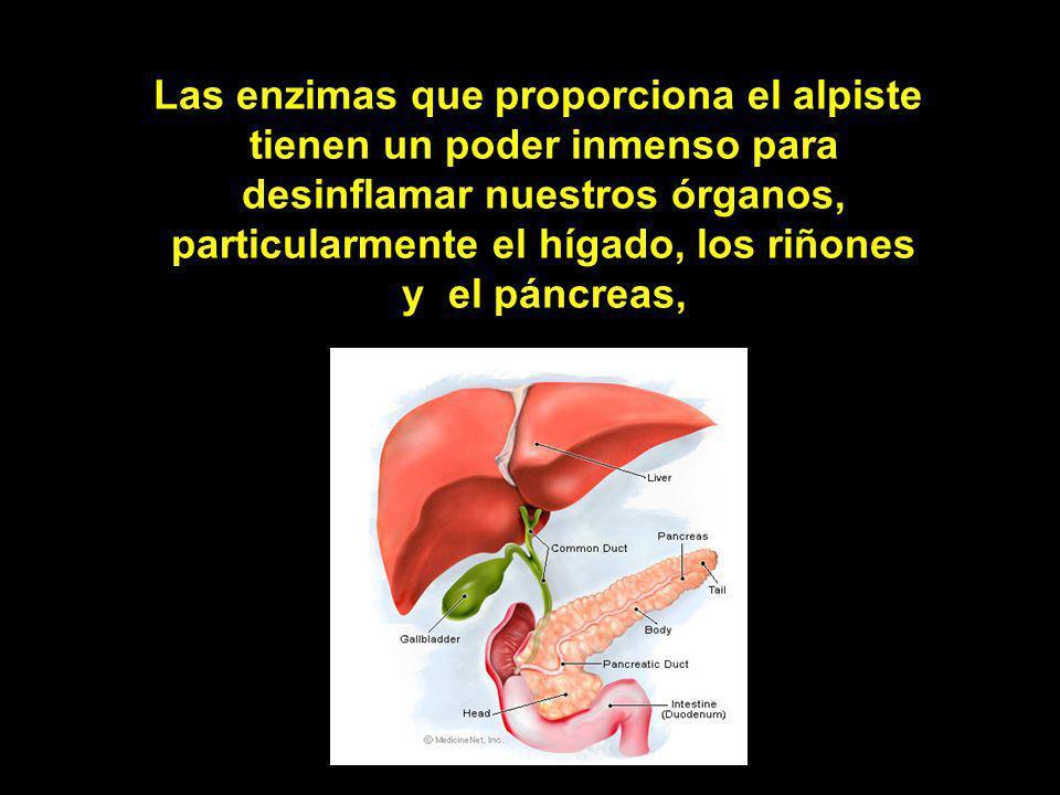 Las enzimas que proporciona el alpiste tienen un poder inmenso para desinflamar nuestros órganos, particularmente el hígado, los riñones y el páncreas,