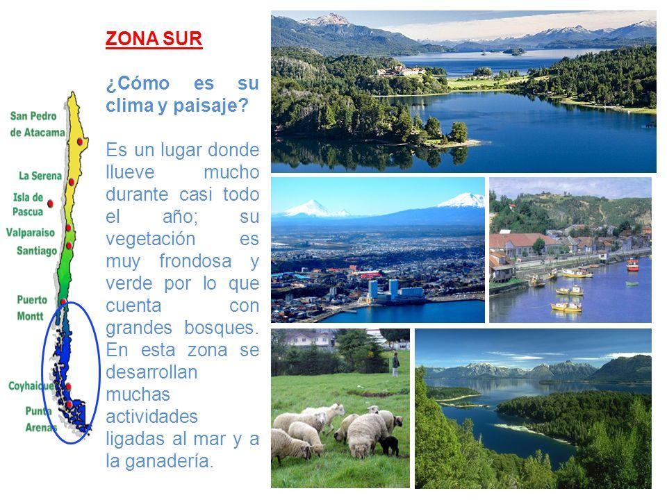 ZONA SUR ¿Cómo es su clima y paisaje? Es un lugar donde llueve mucho durante casi todo el año; su vegetación es muy frondosa y verde por lo que cuenta