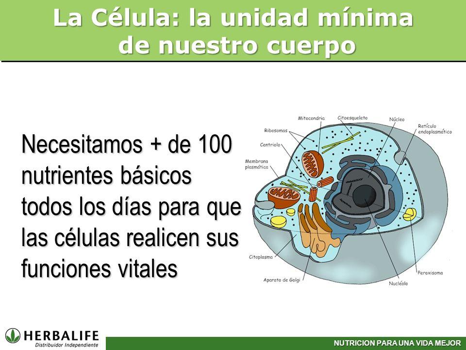 Necesitamos + de 100 nutrientes básicos todos los días para que las células realicen sus funciones vitales La Célula: la unidad mínima de nuestro cuer