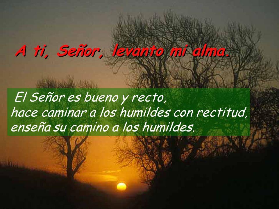 Salmo 24 A ti, Señor, levanto mi alma. A ti, Señor, levanto mi alma. Muéstrame, Señor, tus caminos, instrúyeme en tus sendas. Guíame en tu verdad; ins