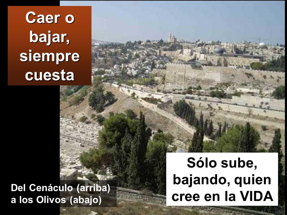 MONTE DE LOS OLIVOS Después de cantar el salmo, salieron para el monte de los Olivos. Jesús les dijo: Todos vais a caer, como está escrito: