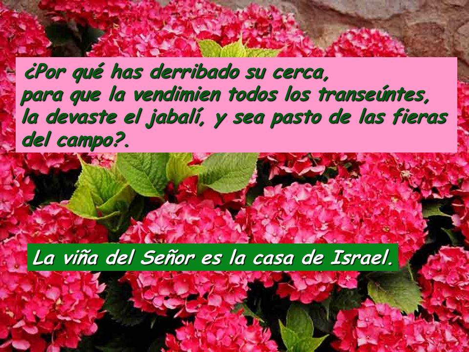 Salmo 79 Arrancaste una vid de Egipto, y expulsaste naciones para plantarla; extendía sus sarmientos hasta el mar, sus retoños hasta el río Eufrates.