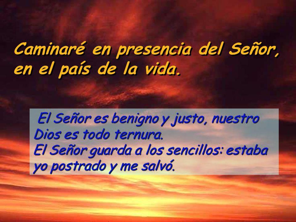 Caminaré en presencia del Señor, en el país de la vida. Caminaré en presencia del Señor, en el país de la vida. Me envolvieron las redes de la muerte,