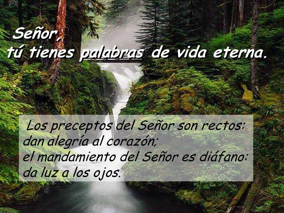 Salmo 18 Señor, tú tienes palabras de vida eterna. Señor, tú tienes palabras de vida eterna. La ley del Señor es perfecta, es descanso para el alma; e