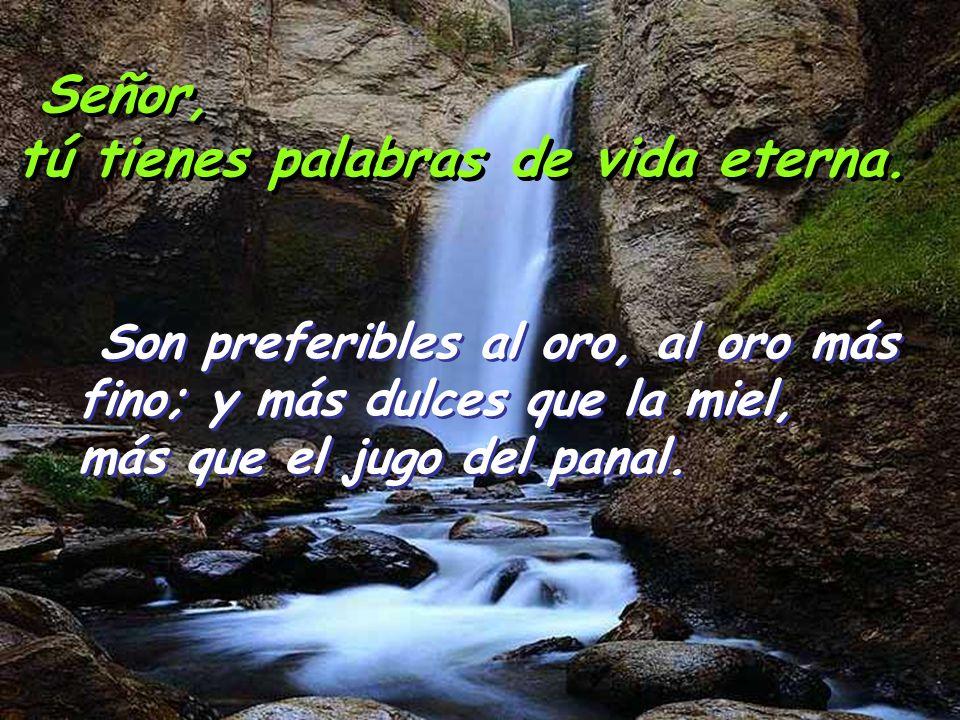 Señor, tú tienes palabras de vida eterna. El amor del Señor es puro: estable para siempre; los juicios del Señor son verdad: todos justos por igual. E