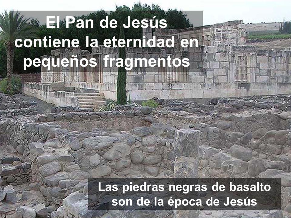 JESÚS VIDA DEL MUNDO Más que el Maná (AT), el Cuerpo y la Sangre de Jesús son el Pan de los cristianos (NT) Jn 6, 41-51 Dom XIX y XX REACCIONES: Lo po