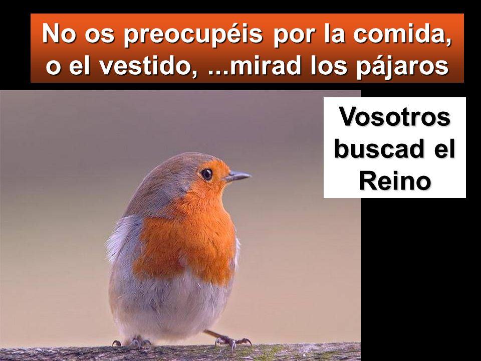 No os preocupéis por la comida, o el vestido,...mirad los pájaros Vosotros buscad el Reino