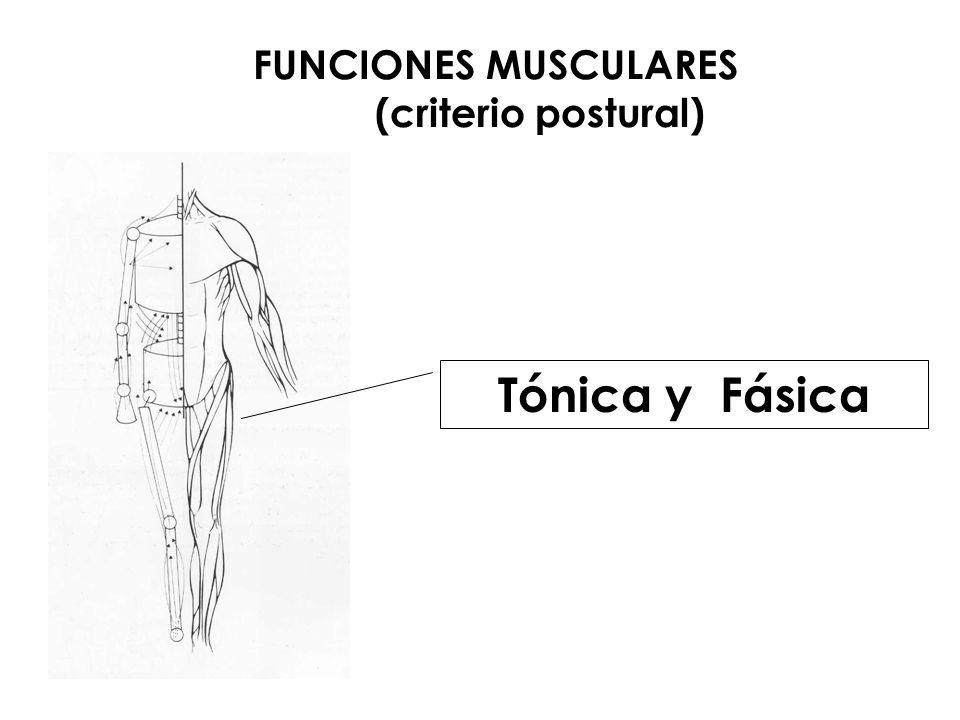 FUNCIONES MUSCULARES (criterio postural) Tónica y Fásica