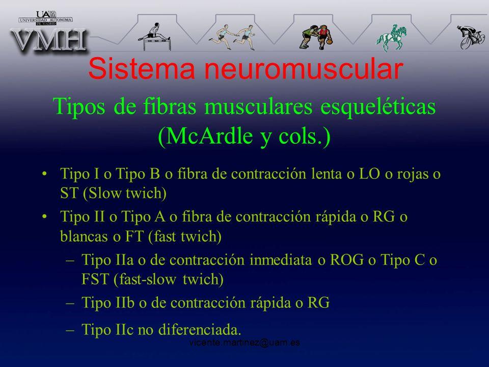 Sistema neuromuscular Tipos de fibras musculares esqueléticas (McArdle y cols.) Tipo I o Tipo B o fibra de contracción lenta o LO o rojas o ST (Slow t