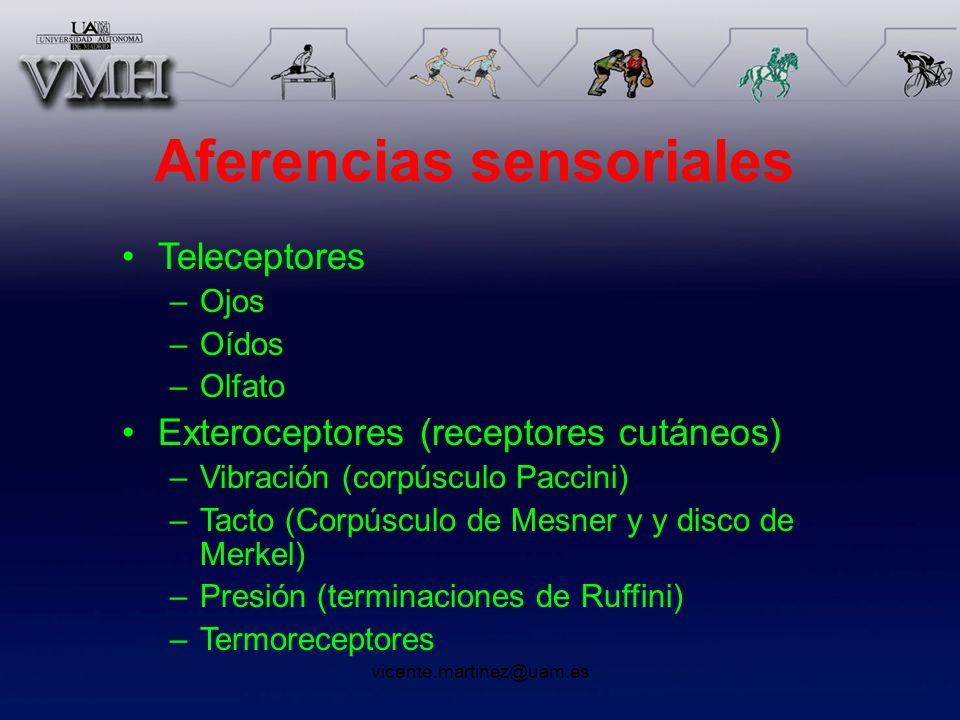 Aferencias sensoriales Teleceptores –Ojos –Oídos –Olfato Exteroceptores (receptores cutáneos) –Vibración (corpúsculo Paccini) –Tacto (Corpúsculo de Me