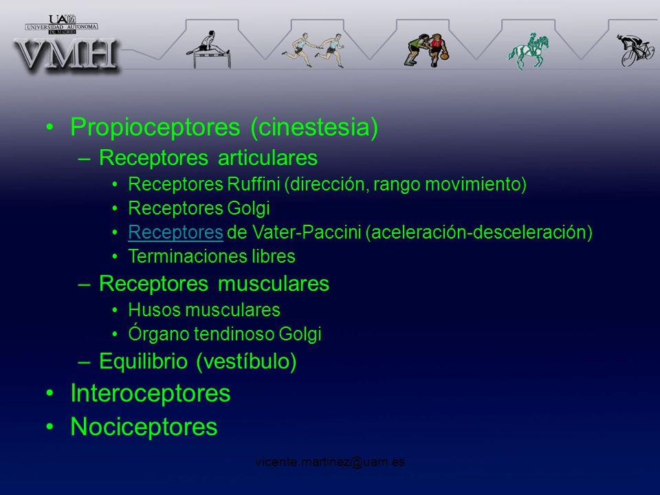 vicente.martinez@uam.es Propioceptores (cinestesia) –Receptores articulares Receptores Ruffini (dirección, rango movimiento) Receptores Golgi Receptor