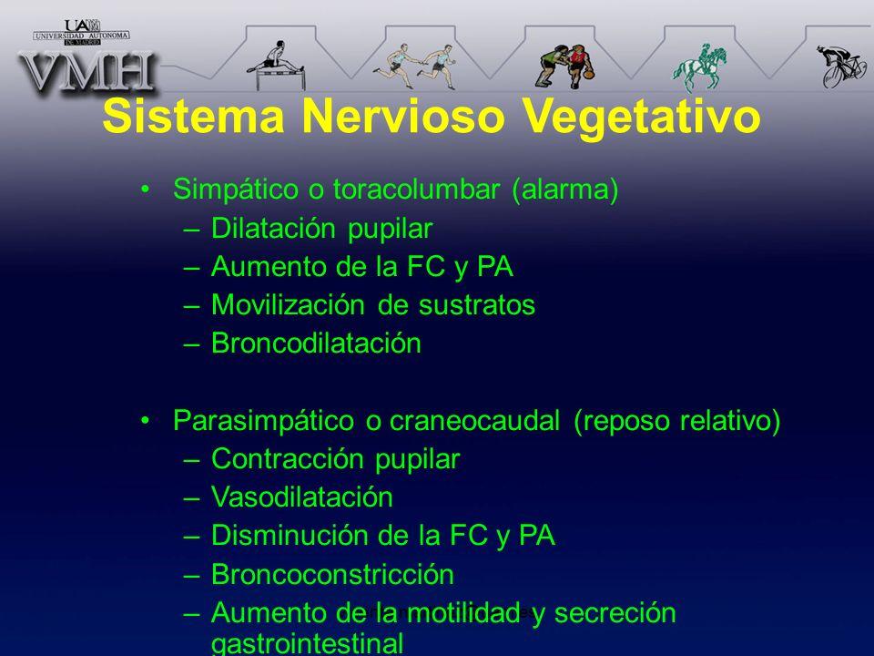 vicente.martinez@uam.es Sistema Nervioso Vegetativo Simpático o toracolumbar (alarma) –Dilatación pupilar –Aumento de la FC y PA –Movilización de sust