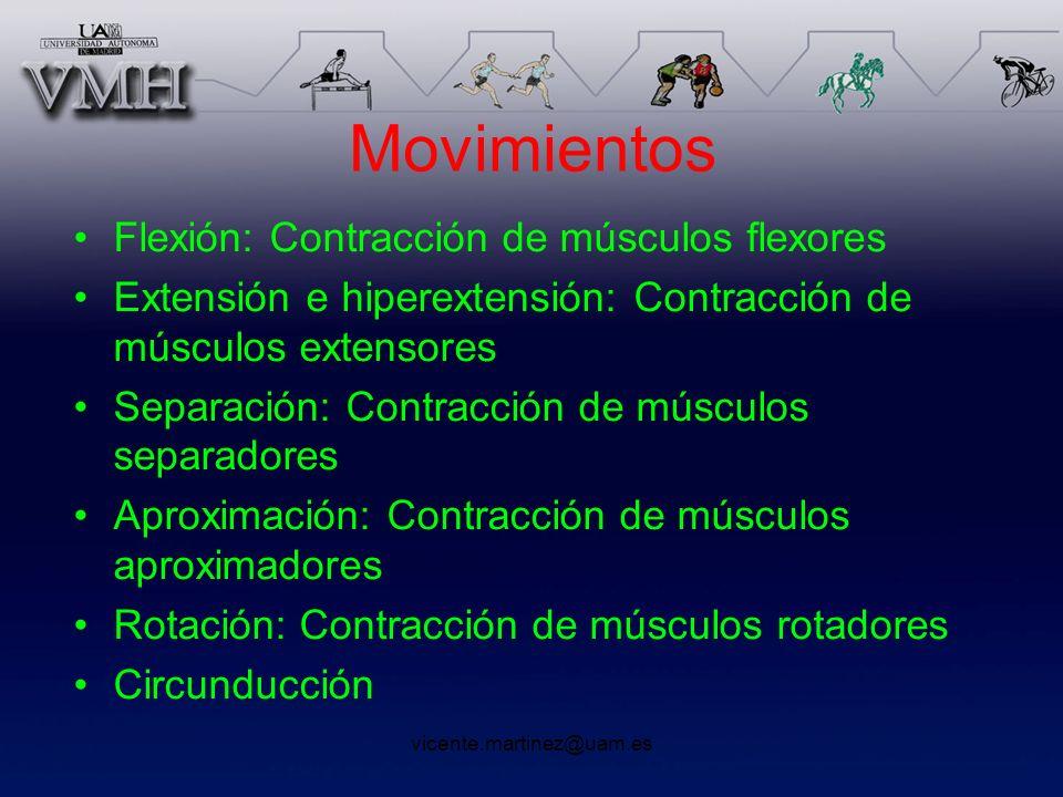 vicente.martinez@uam.es Movimientos Flexión: Contracción de músculos flexores Extensión e hiperextensión: Contracción de músculos extensores Separació