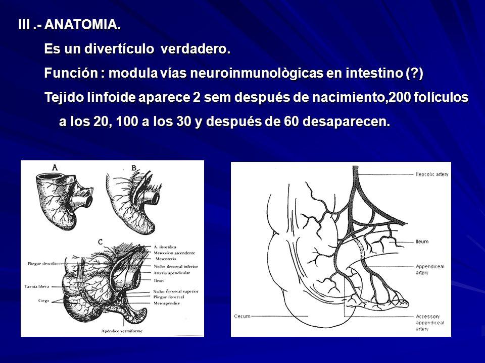 III.- ANATOMIA. Es un divertículo verdadero. Es un divertículo verdadero. Función : modula vías neuroinmunològicas en intestino (?) Función : modula v