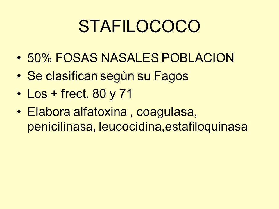 STAFILOCOCO 50% FOSAS NASALES POBLACION Se clasifican segùn su Fagos Los + frect. 80 y 71 Elabora alfatoxina, coagulasa, penicilinasa, leucocidina,est