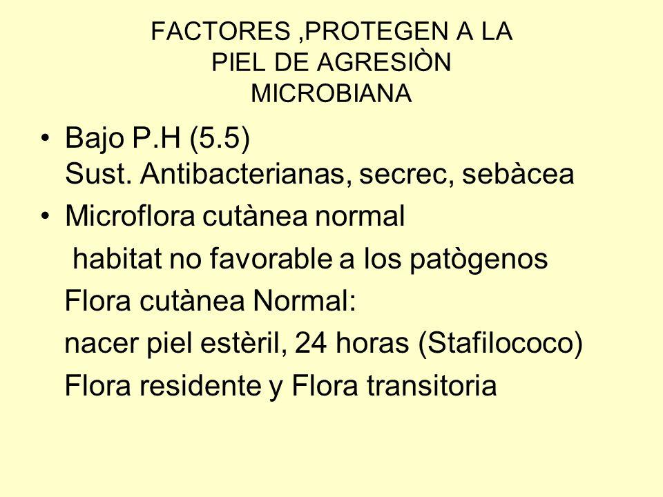 FACTORES,PROTEGEN A LA PIEL DE AGRESIÒN MICROBIANA Bajo P.H (5.5) Sust. Antibacterianas, secrec, sebàcea Microflora cutànea normal habitat no favorabl