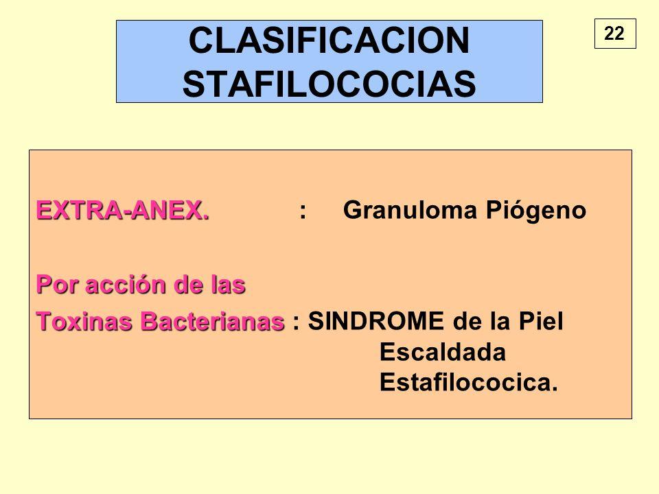 CLASIFICACION STAFILOCOCIAS EXTRA-ANEX. EXTRA-ANEX. : Granuloma Piógeno Por acción de las Toxinas Bacterianas Toxinas Bacterianas : SINDROME de la Pie