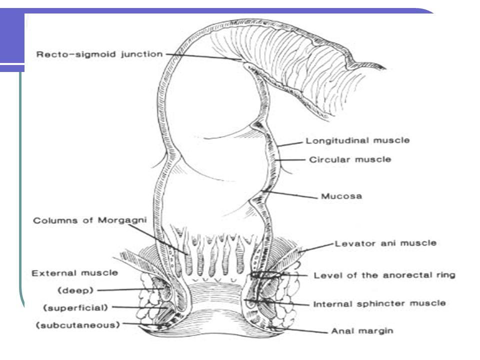 Fisura Anal Definición: Es una ulcera eliptica en el canal anal desde línia dentada al margen anal.